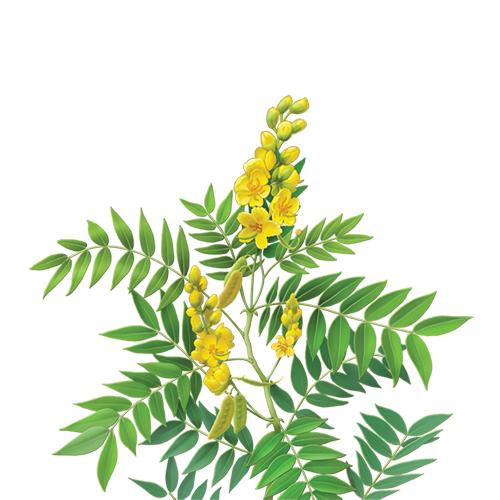 Ceai de slabit cu frunze de senna Sveltaflor 20dz Fares