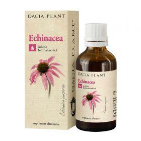 Echinacea tinctura