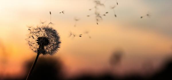 Cum sa va feriti de alergiile de primavara